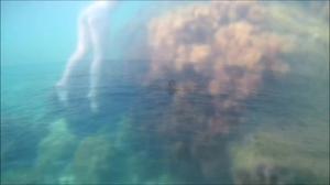 Брюнетка отсасывает в море - скриншот #1